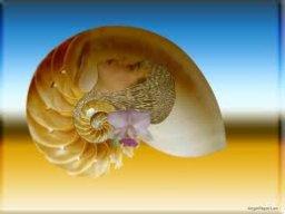 ốc biển